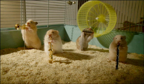 Clever-Hamsters-criceti-musicisti-01