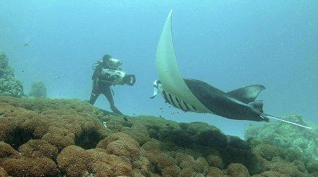 manta-gigante-mozambico-oceano-foto-07