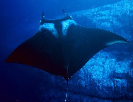 manta-gigante-mozambico-oceano-foto-08