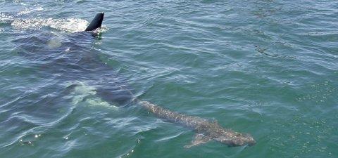 orca-karate-squalo-01