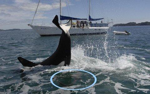 orca-karate-squalo-02