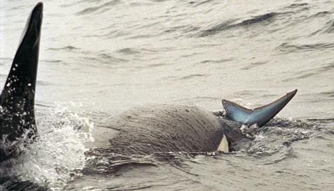 orca-karate-squalo-03