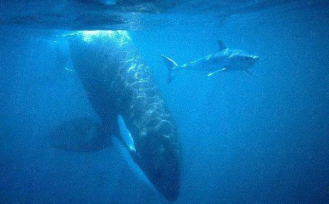orca-karate-squalo-04