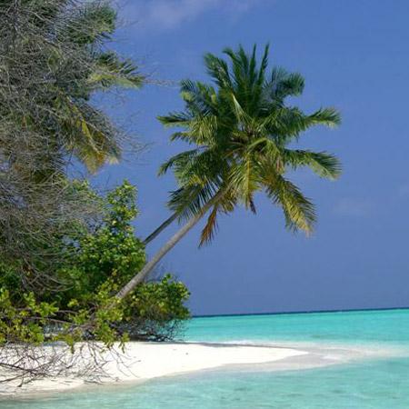 palma_maldive-polo-nord-artico