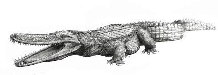 pancake-croc