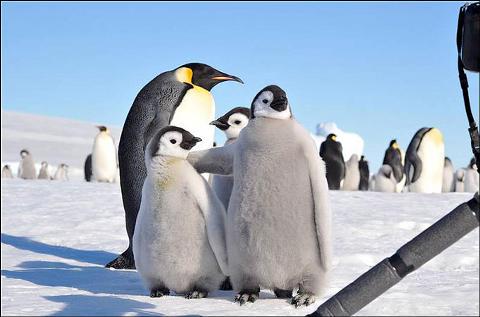 pinguini-foto-animali-amici