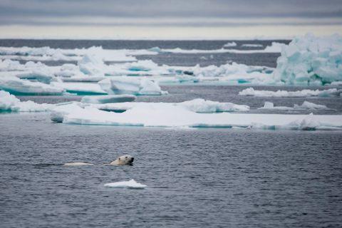 polo-nord-artico-oggi