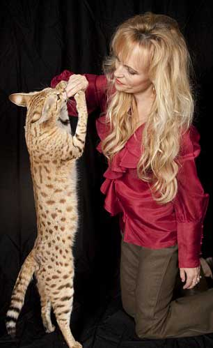 savannah-super-gatto-cat-incrocio-felino