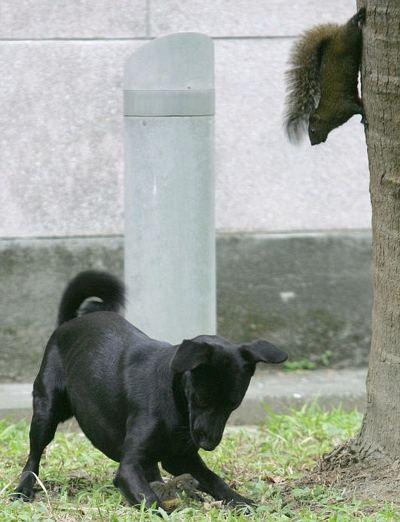 scoiattolo-difende-figlio-da-cane-foto-01