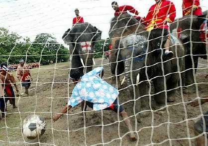 sport-assurdi-elefanti-contro-umani