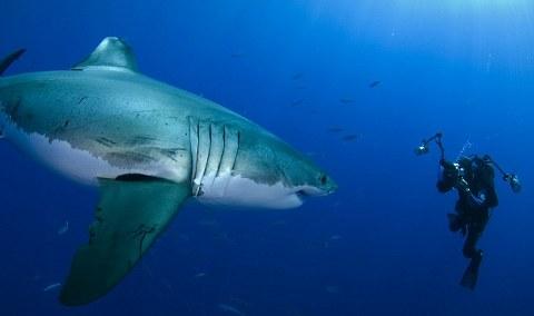 squalo-shark-sorriso-smile-Amos-Nachoum
