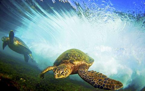 tartaruga-tuffo-oceano-corrente-02