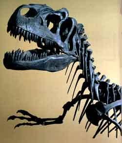 tirannosauro-rex-entinzione