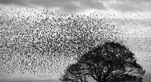 uccelli-stormi-cielo-nube-foto-immagine-pic-03