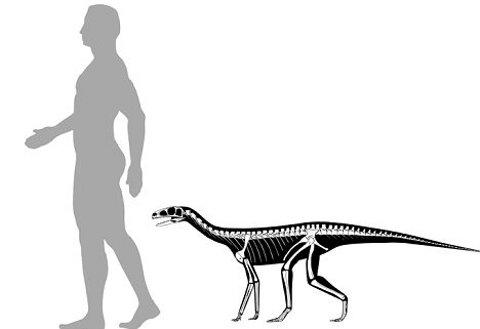 Asilisaurus-silosauro-antenato-dinosauro-02