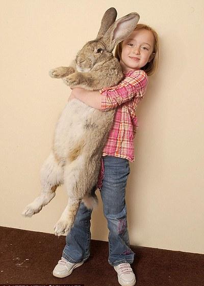 Darius-coniglio-gigante-guinness-record-animale-foto-01