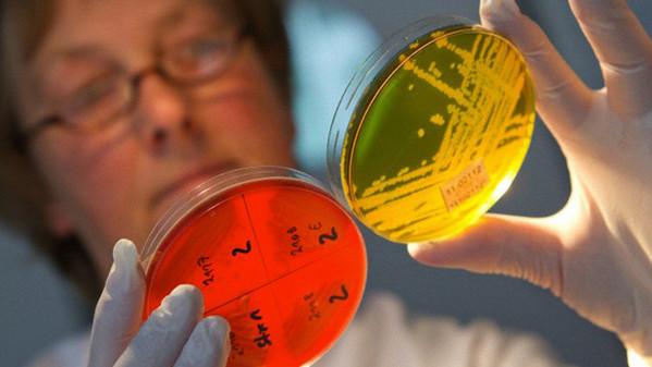 Escherichia-coli-malattia-verdura-infezione-01