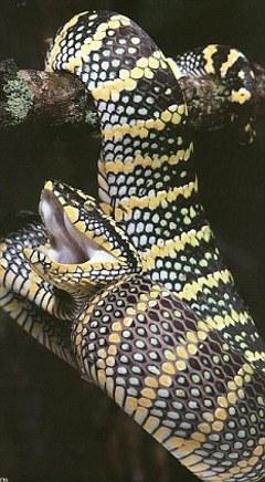 Glamoxy-Snake-botox-serpente-veleno-snake-spray-02