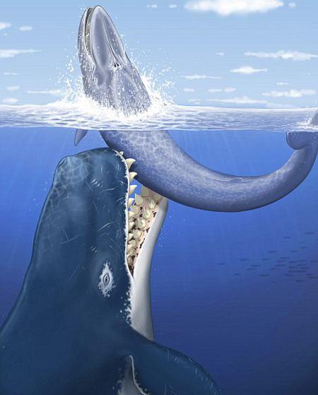 Leviathan-Melvillei-foto-predatore-marino-01