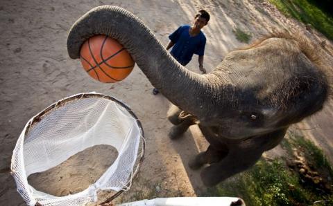 Toktak-elefante-gioca-basket-01