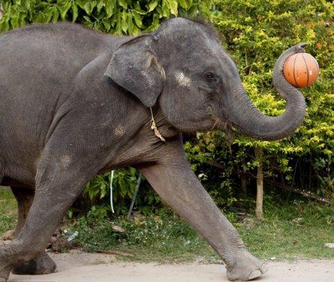 Toktak-elefante-gioca-basket-02