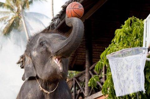 Toktak-elefante-gioca-basket-03