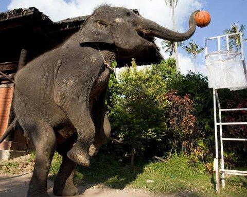 Toktak-elefante-gioca-basket-04