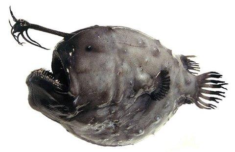animali-nuove-specie-scoperta-groenlandia-mare-foto-03