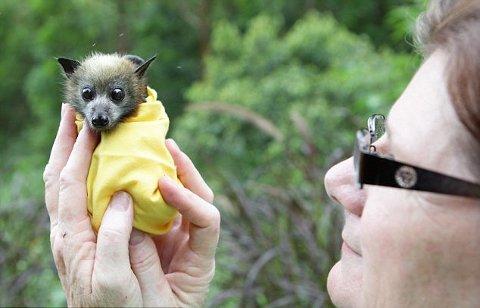 australia-pipistrelli-ambiente-foto-03