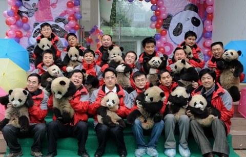 cuccioli-panda-cina-foto-01