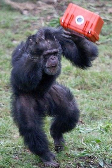 film-movie-scimmia-02