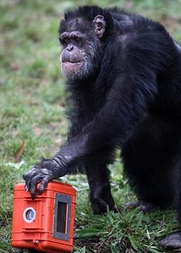 film-movie-scimmia-03
