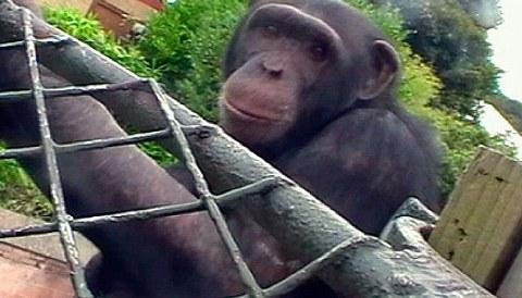 film-movie-scimmia-04