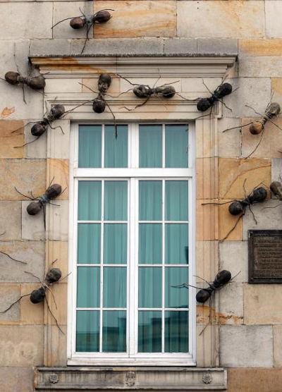 formiche-giganti-cile-palazzo
