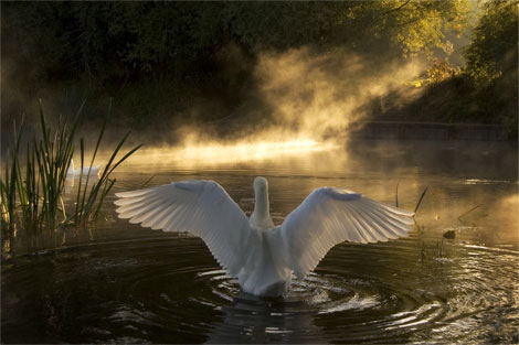 foto-immagine-pic-national-geographic-swan-river-avon