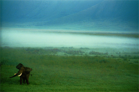 foto-national-geographic-african-elephant-tanzania-