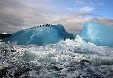 foto-national-geographic-pinguini-blue-iceberg-