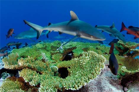 foto-national-geographic-shark-kingman-