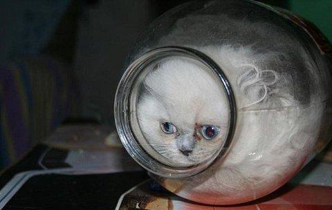 gatto-barattolo-foto-01
