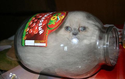 gatto-barattolo-foto-02
