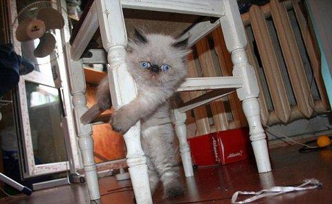 gatto-barattolo-foto-03