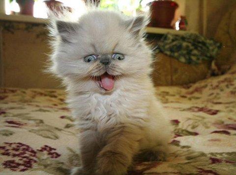 gatto-barattolo-foto-04