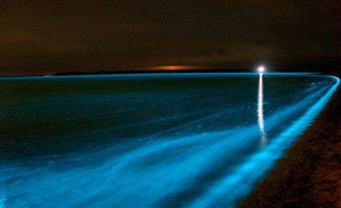 lago-bioluminescenza-foto-02.jpg