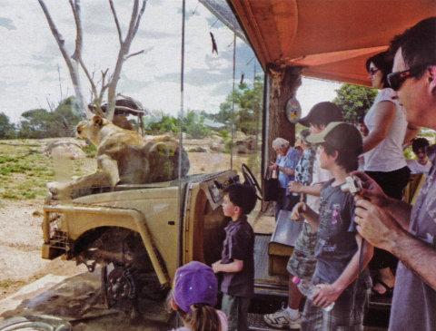 lion-car-leone-zoo-gioco-australia-trucco