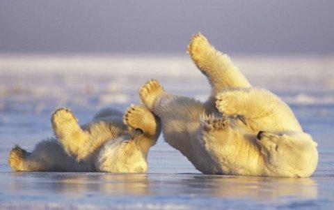 mamma-orsa-orsacchiotto-foto-01
