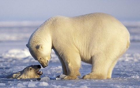 mamma-orsa-orsacchiotto-foto-02