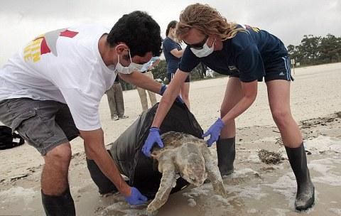 marea-nera-disastro-ambientale-golfo-messico-petrolio-foto-01