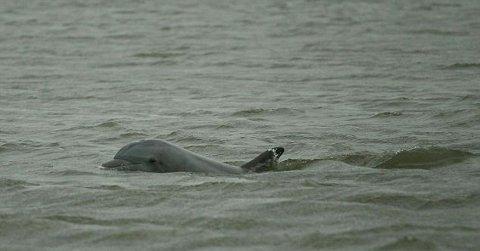 marea-nera-disastro-ambientale-golfo-messico-petrolio-foto-02