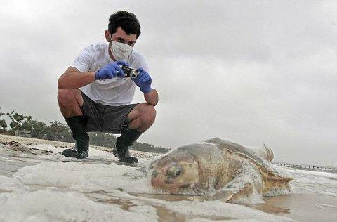 marea-nera-disastro-ambientale-golfo-messico-petrolio-foto-04