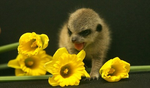 marmotta-animale-neonata-foto-01